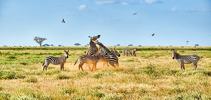 1 Day Tsavo East Safari From Mombasa From Kshs. 9,300/= Per Person (Residents)