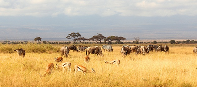 3 Days/2 Nights Tsavo East & Amboseli Road Safari From Mombasa